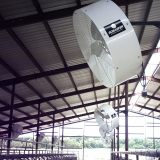 """many 42"""" Versa-Kool Circulation Fan, Cord, Yoke Mount fitted on the ceiling of a factor warehouse"""